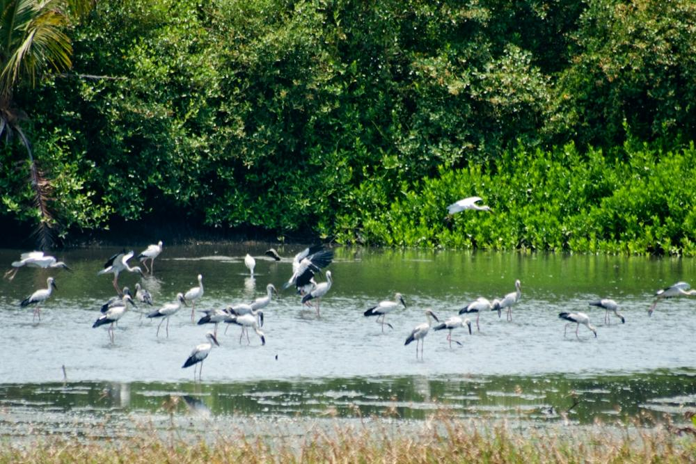 Thattekad Bird Sanctuary