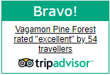 Pine Forest Vagamon