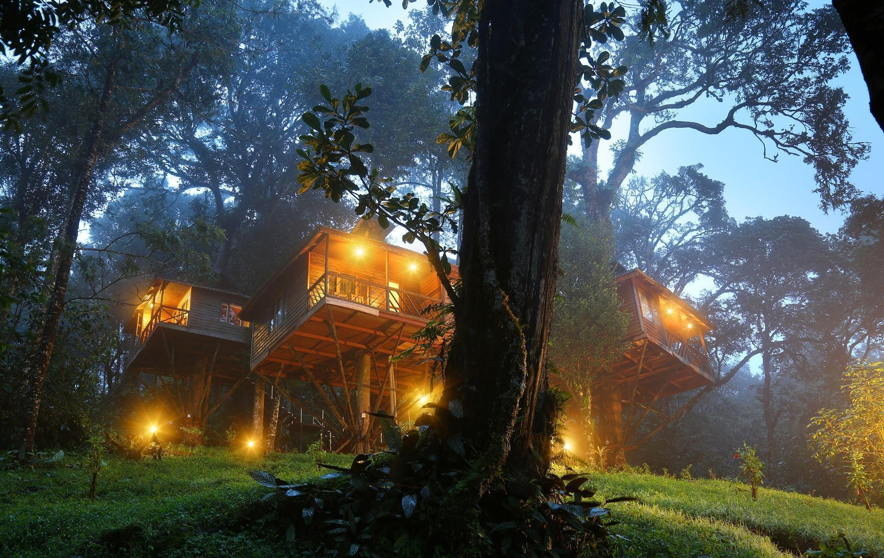 Tree Houses in Kerala
