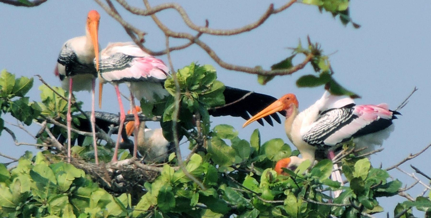 Bird watching in Kerala