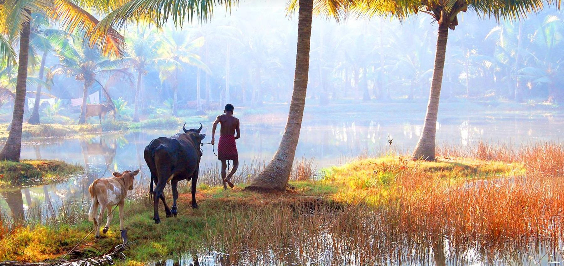 Village walk in Kerala