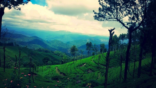 Munnar in Januray