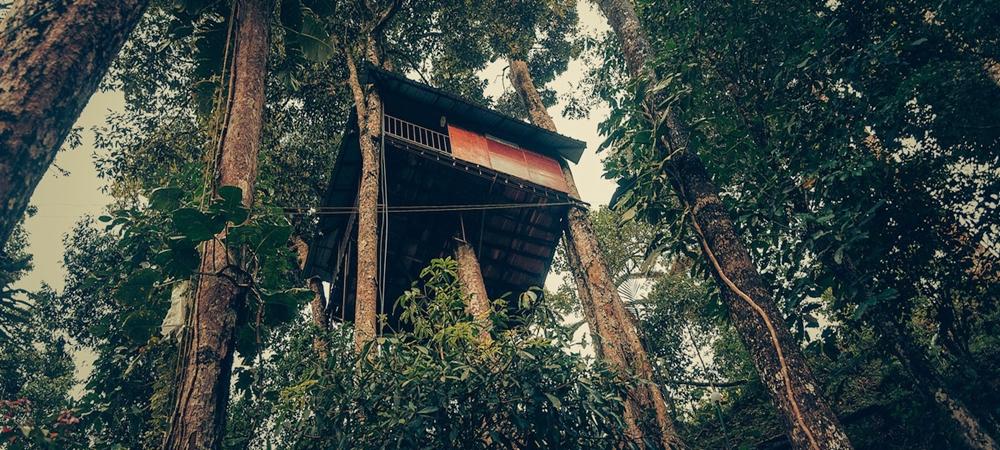 Ela Ecoland Nature Retreat- Munnar