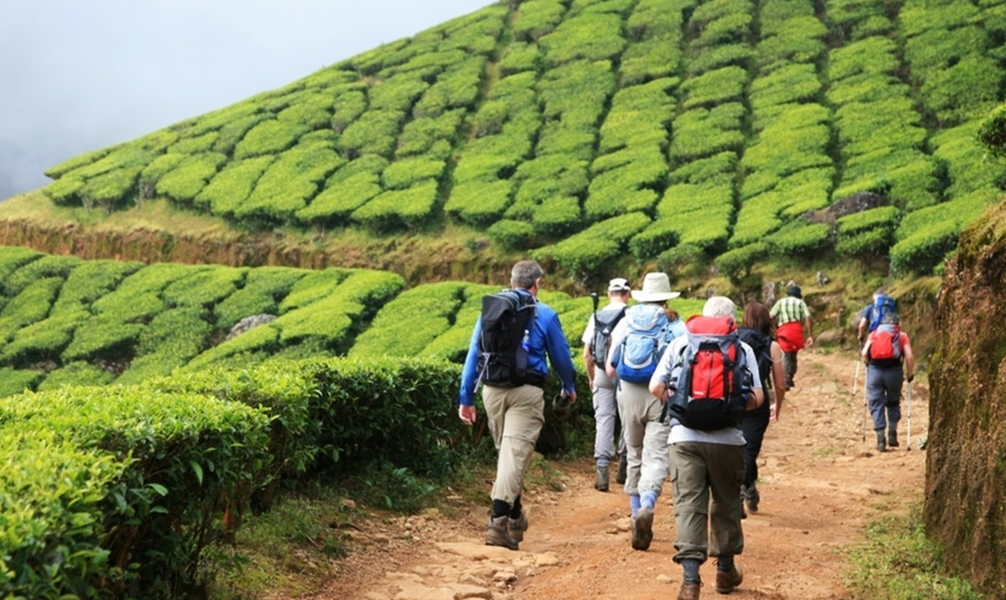 Trekking through the tea gardens of Kerala