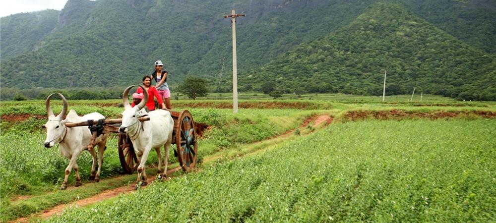 bullock-cart- in-farm