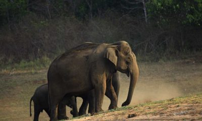 An elephant with its calf in Thekkady