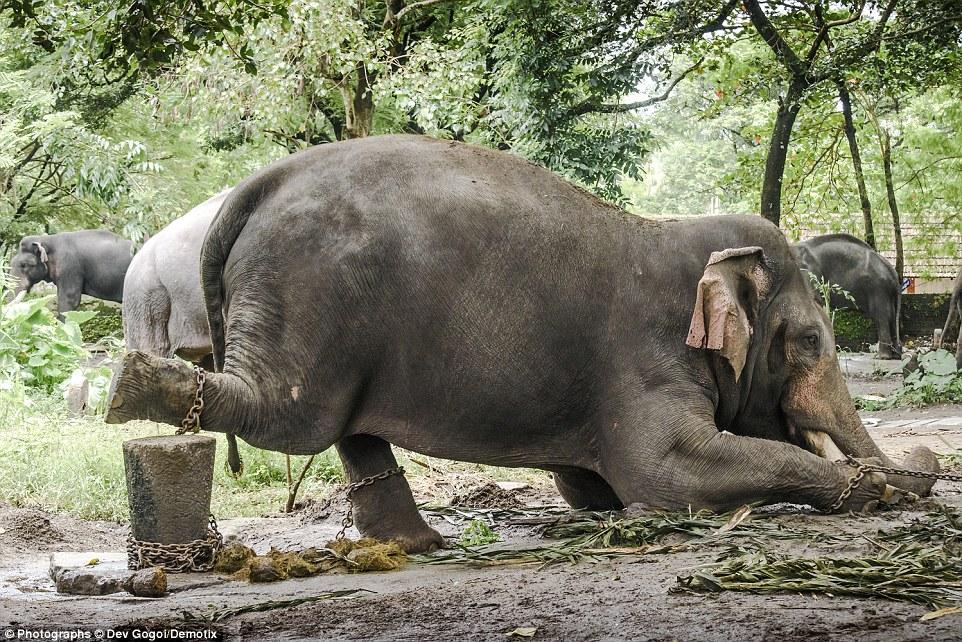 Elephant Torture Kerala