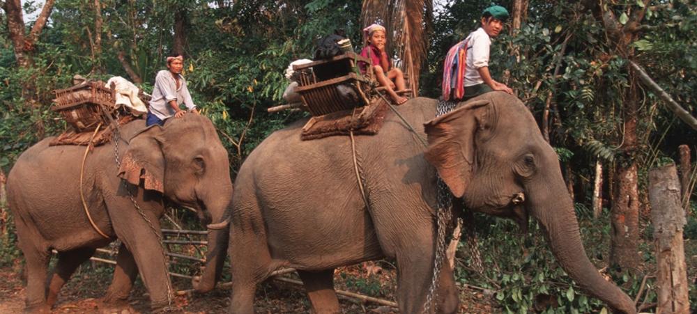 Elephant rides are cruelty towards animals