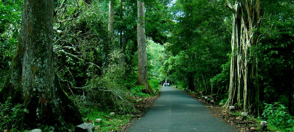 A road cutting through a thick forest
