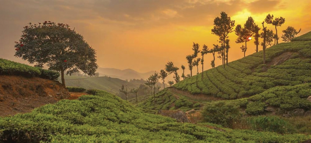 Sun setting over the lush tea gardens of Munnar