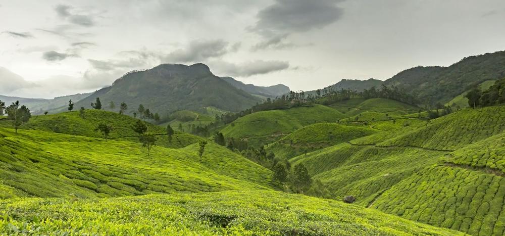 Lush green hills and tea gardens of Munnar