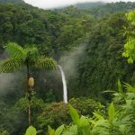 Thick forests and a glittering waterfall