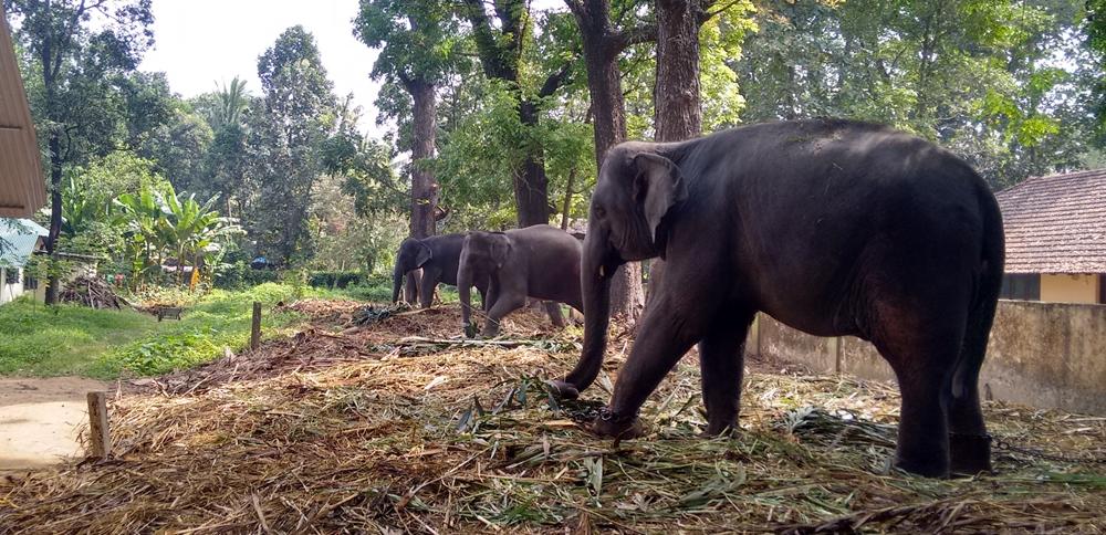 Kodanad Elephant Camp