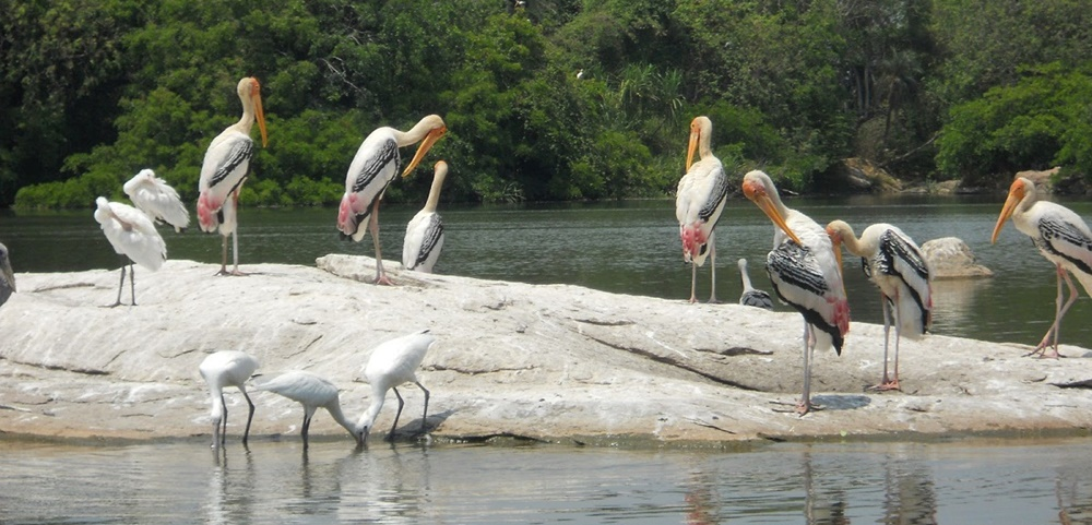 Birds in Kumarakom
