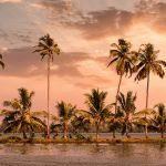 Backwaters with coconut palms
