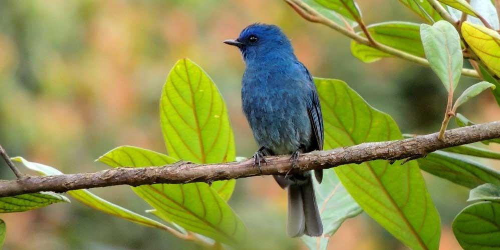 Bird watching in Kerala