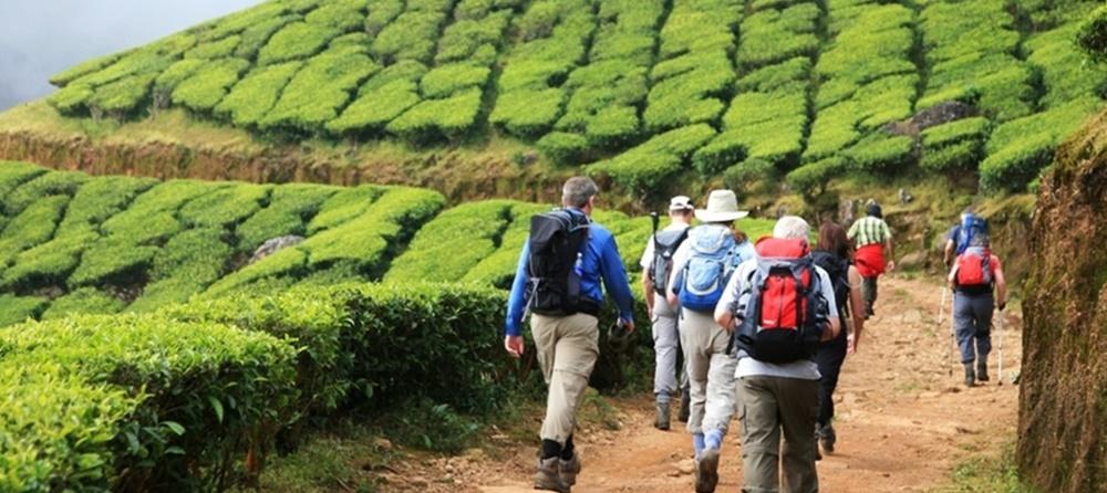 Travelers trekking in Munnar