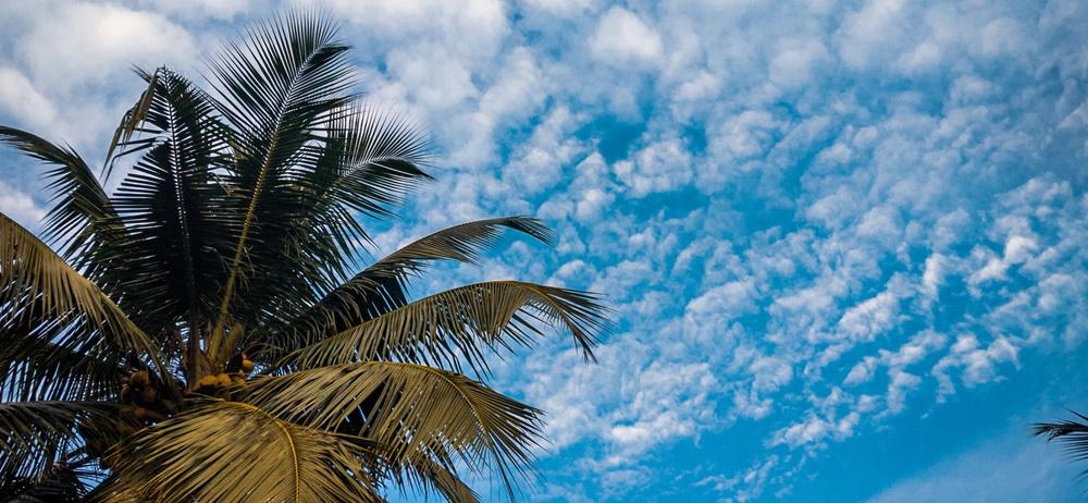 Coconut tree and sky